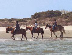 Jekyll Island Horseback Ride On The Beach Georgia Islands Trail Riding