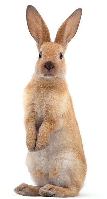 Clicker training your rabbit: fun tricks and games (3 videos!) | Small Pet Select Blogs | Small Pet Select -  Clicker training your rabbit: fun tricks and games (3 videos!) – | Your #1 Source for Timothy Hay - #Blogs #clicker #fun #games #Pet #Pets #Petsaccessories #Petsdiy #Petsdogs #Petsdogsaccessories #Petsdogsbreeds #Petsdogspuppies #Petsfish #Petsfunny #Petsideas #Petsquotes #Petsunique #rabbit #select #small #smallPets #smallPetsforkids #training #tricks #videos