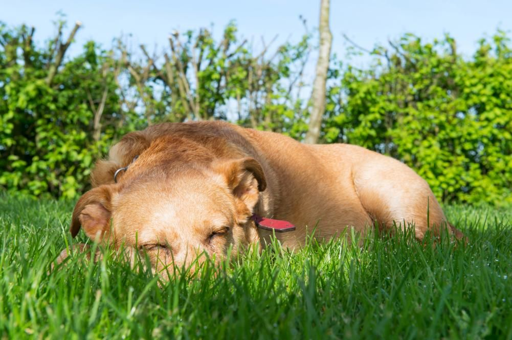 Pet Talk Tips for improving your pet's golden years Dog
