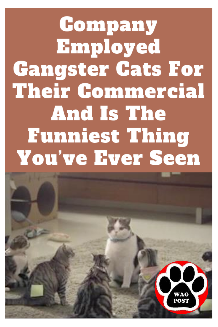 Company Employed Gangster Cats For Their Commercial And Is The Funniest Thing You Ve Ever Seen Funny Cats Funny Commercials