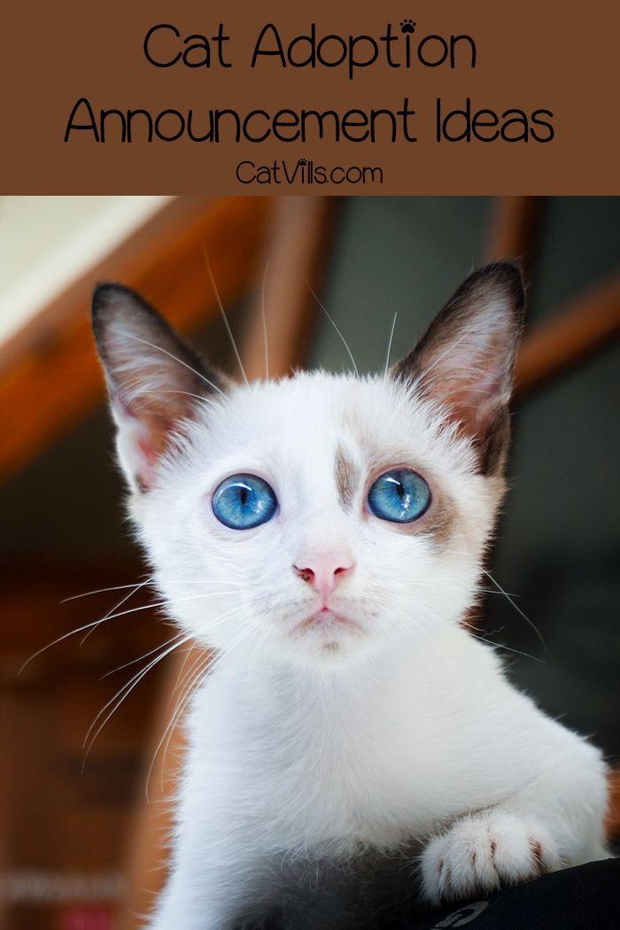 12 Hilarious and Unique Cat Adoption Announcement Ideas