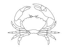 zehnfusskrebs | meerestiere, malvorlagen, ausmalbilder fische