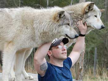 Howling Woods Our Facility Majestic Animals Wolf Dog Animals