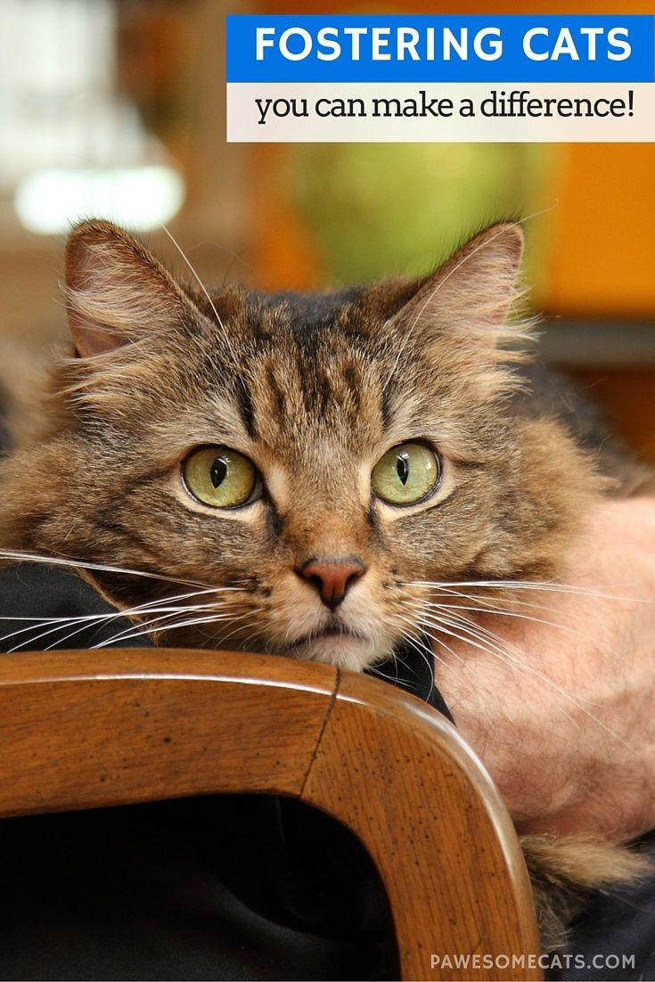 You Can Make A Difference By Fostering Cats Foster Cat Cat Care Cat Plants