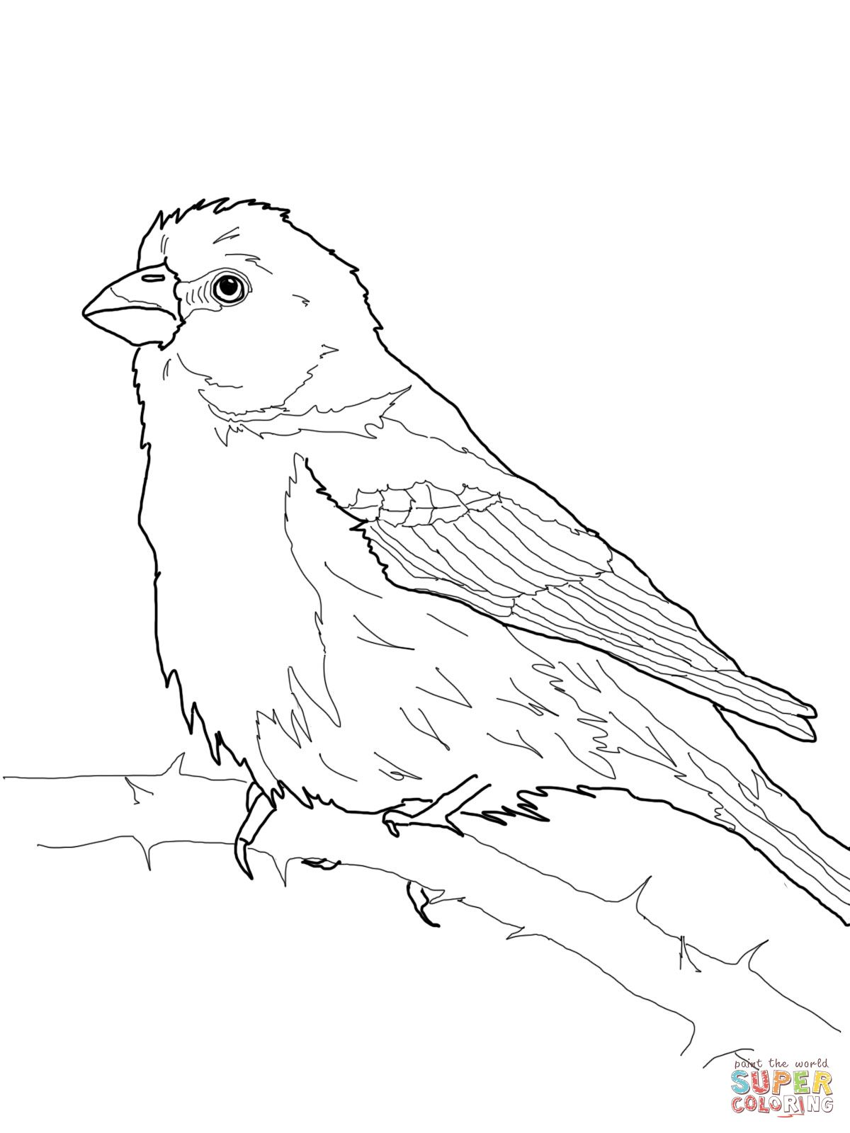 House Finch Coloring Page Supercoloring Com With Images