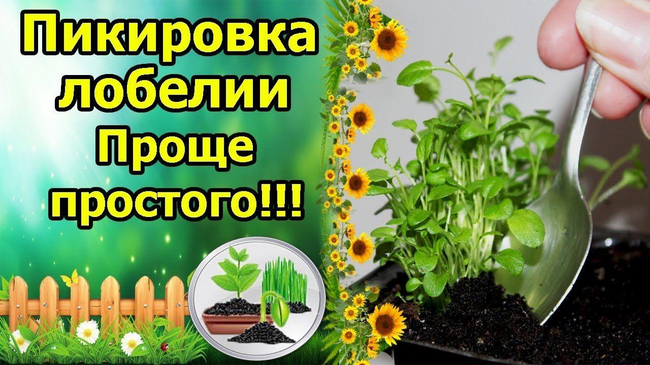 растения рассада семена