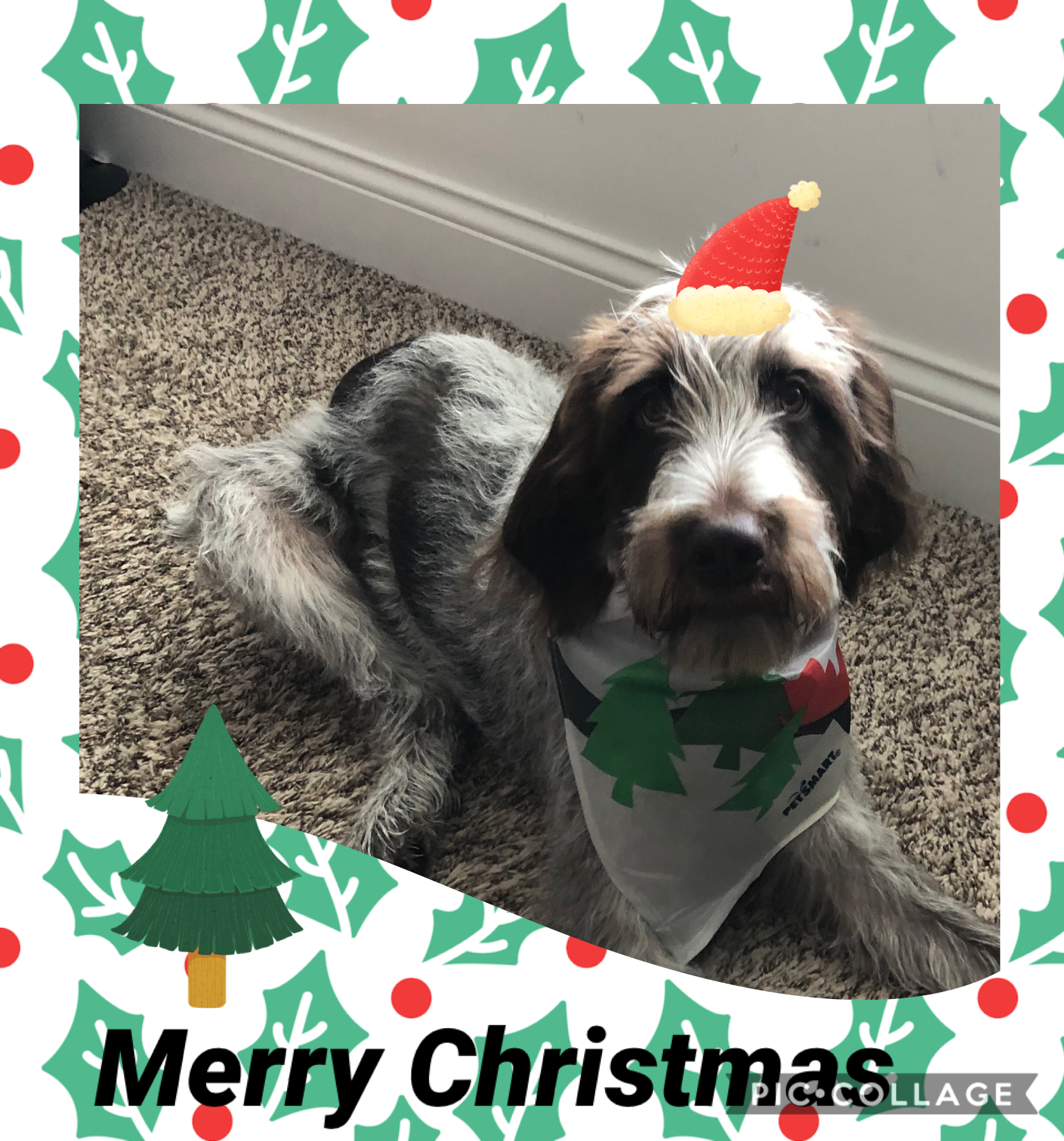 Xmas 2019 With Images Merry