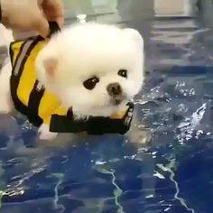 Cute Puppies Videos - Cute Animals Vines