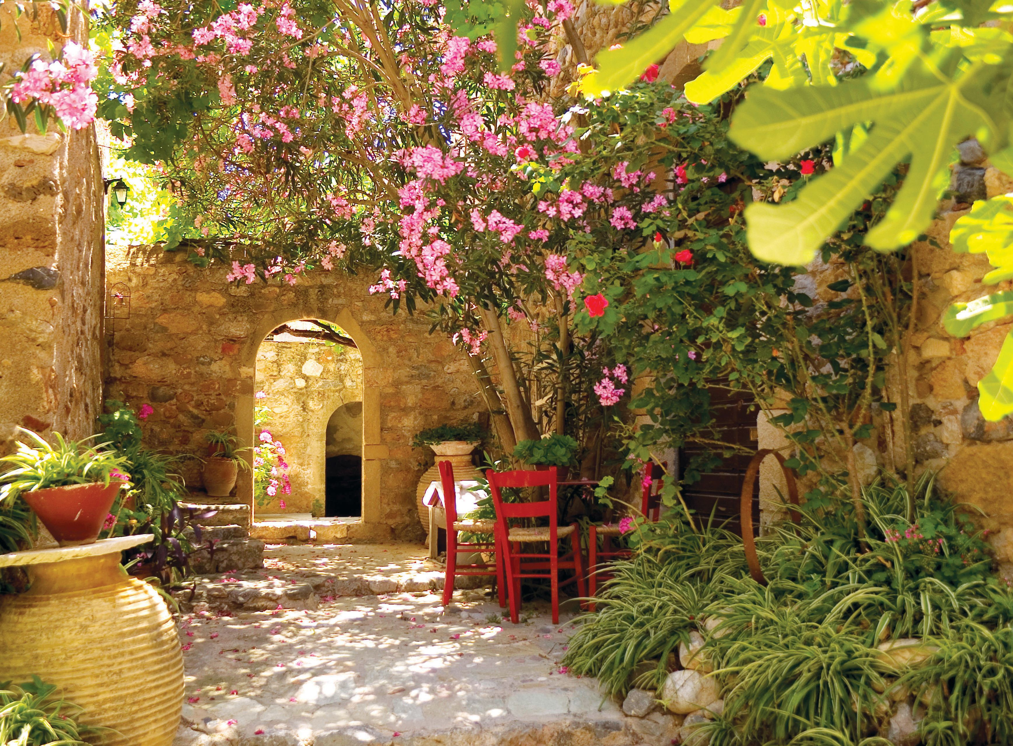 Mexican garden The Nerium Oleander plant grows abundantly in the Mediterranean