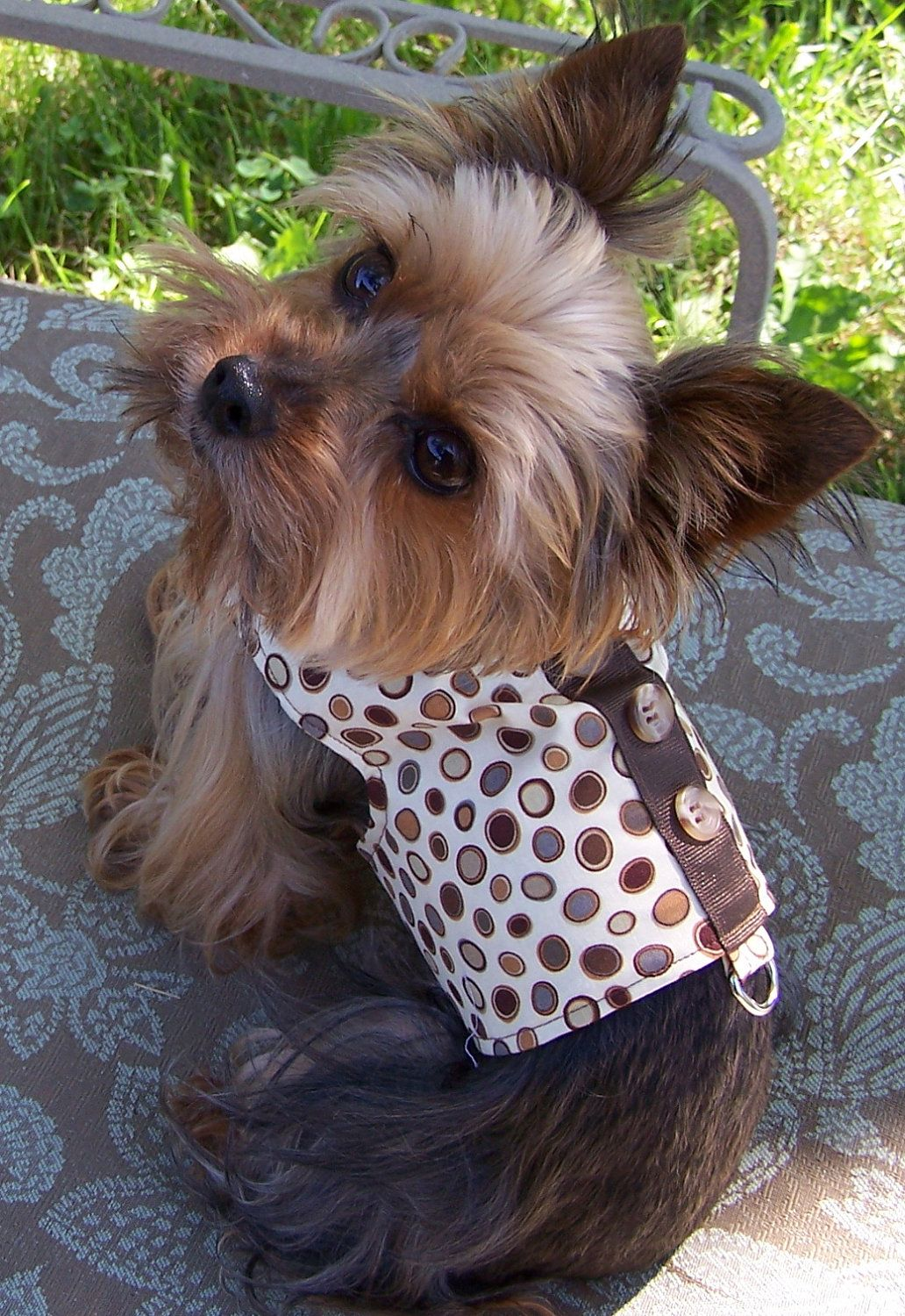 Dog Harness Vest In Pebble print with bow tie Size X-Small for toy