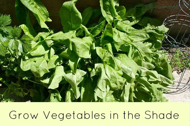 Grow Vegetables in the Shade