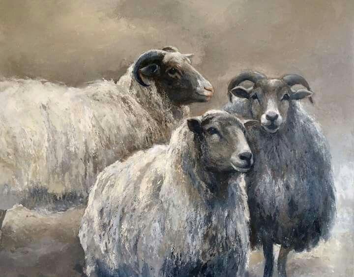 Pingl par anne spooner sur sheep art pinterest - Photos de moutons gratuites ...