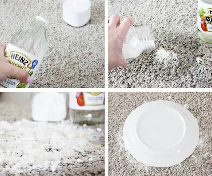 Cleaning Carpet From Pet Stains White Vinegar And