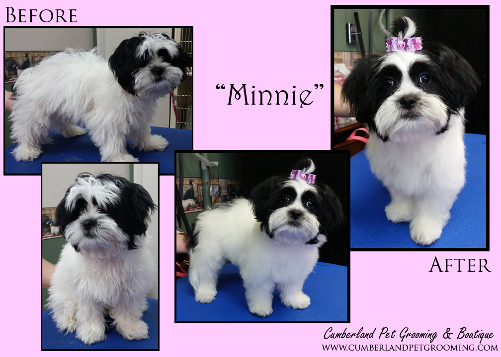 Minnie has cuteness down! (and she knows it)