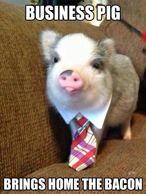 Business pig  LIKE WADDLES IN REAL LIFE!