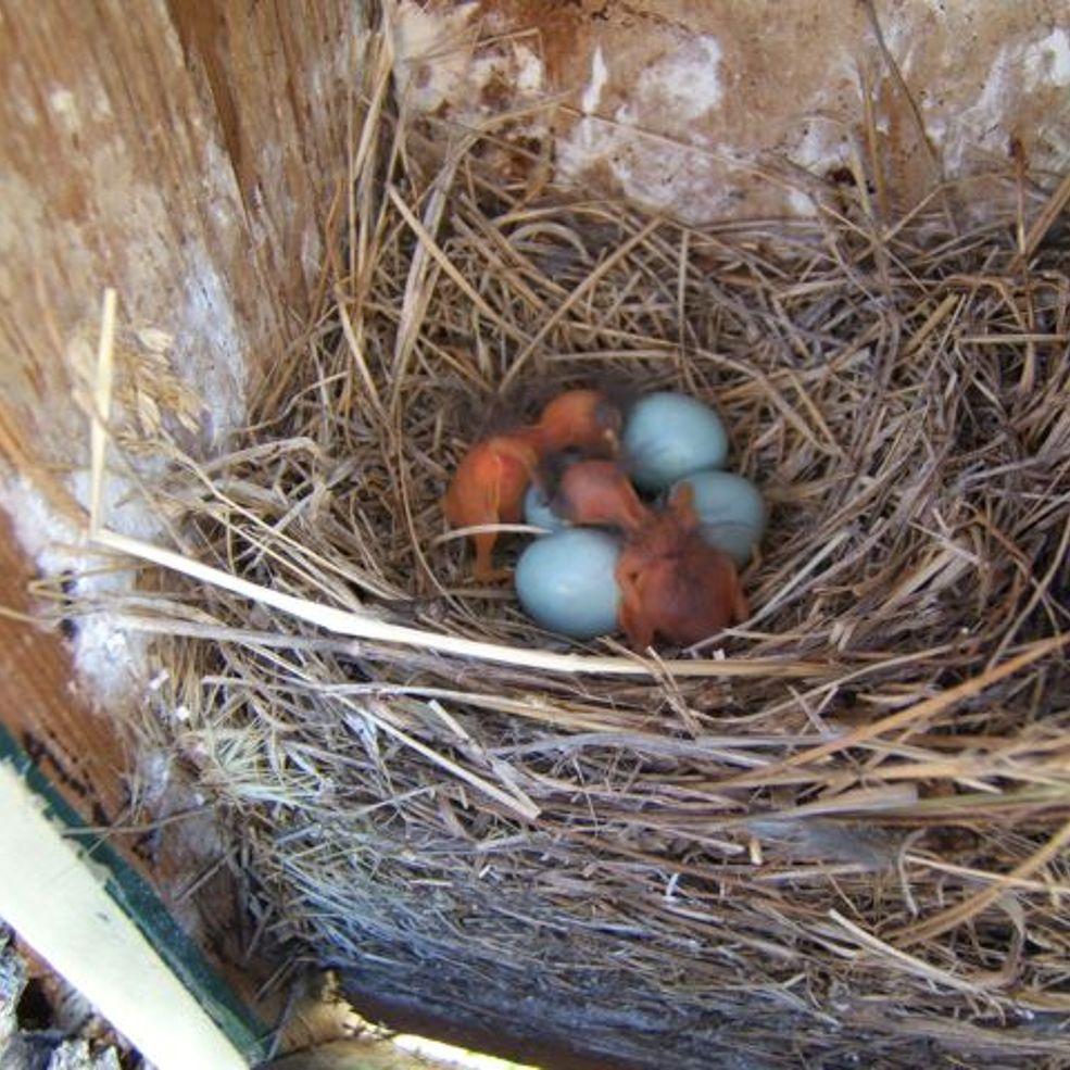 Bird houses to attract birds how to attract birds bird