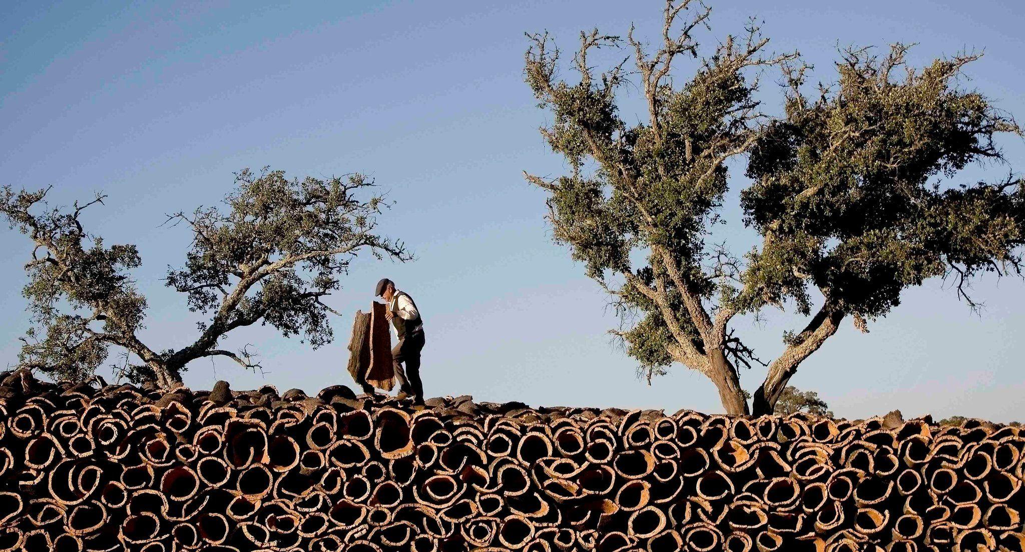 Cork Harvesting In 2019 The Story Of Ferdinand Cork Tree Cork