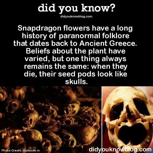 Snapdragon decor | All Hollows Eve | Creepy facts, Weird