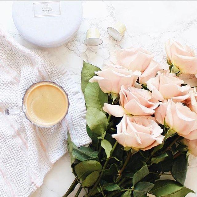 Morning Glory Brittanirosepaper Blooming Tea Flower Tea Tea Sampler