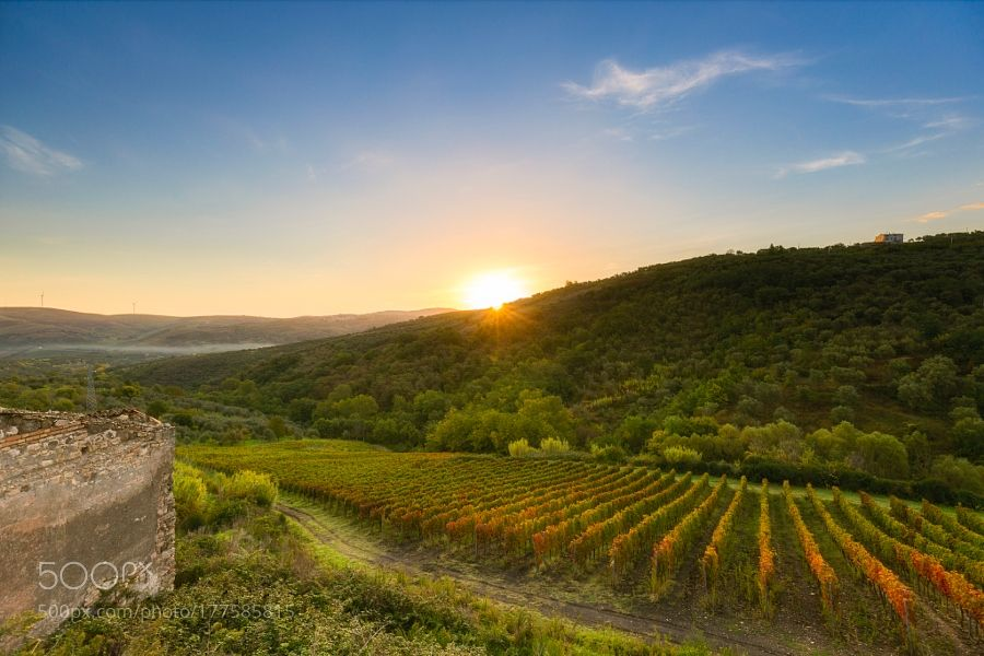 sunrive over vineyard in southern italy by gianlucapisanogp