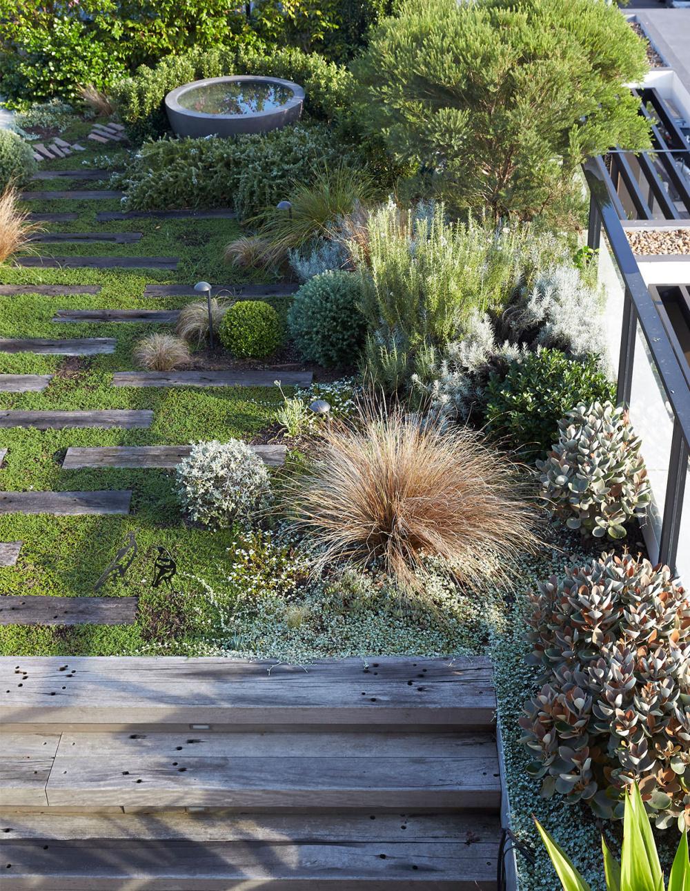 A Robust Rooftop Garden In Rozelle Australian Garden Design Roof Garden Design Rooftop Garden