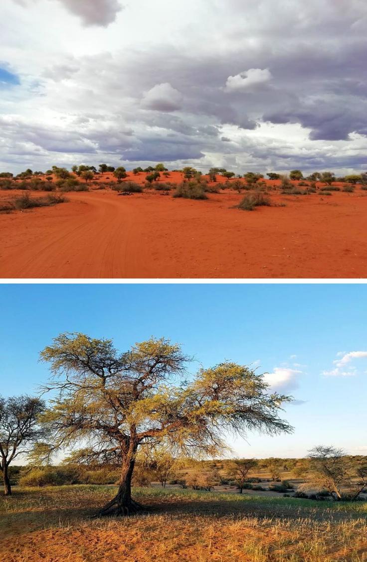Come to Jansen Kalahari Guest Farm to experience Namibia