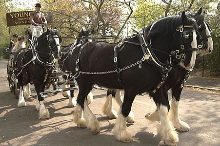 Google Image Result for http://www.ukstudentlife.com/Ideas/Album/HarnessHorseParade/Horse16.jpg