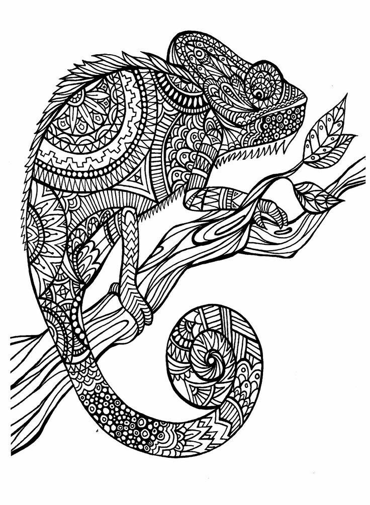 A Magnificien Cameleon To Color Drawn With Zentangle Patterns