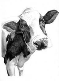 Image Result For How To Draw A Cow Face Cow Art Print Pencil