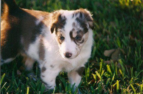 puppy Mocha