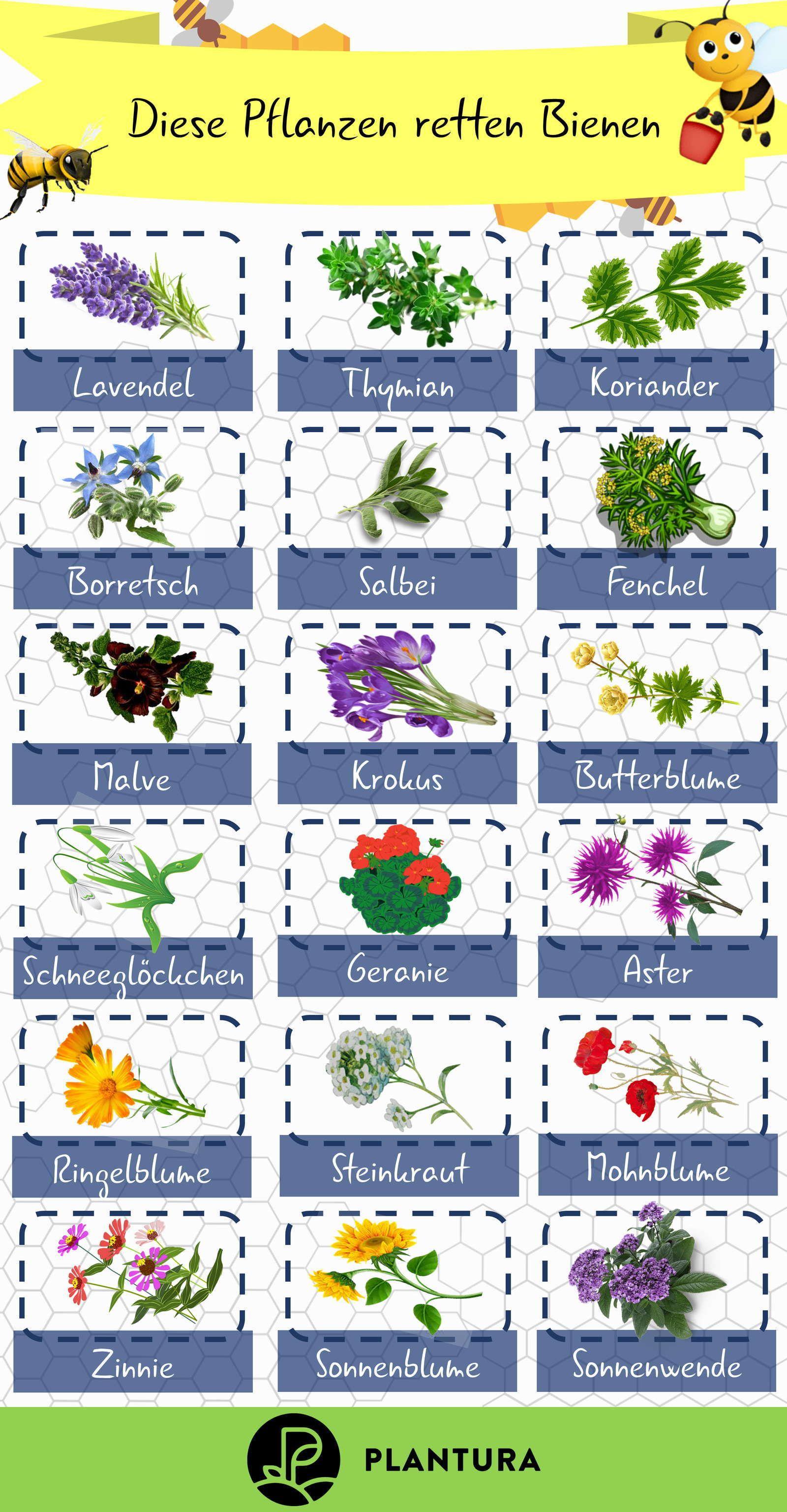 Bienenfreundliche Pflanzen Top 10 Plantura Bienenfreundliche Pflanzen Pflanzen Bienenfreundlicher Garten