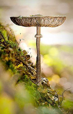 http://organicgirlca.tumblr.com/page/2