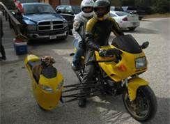 Doggy sidecar !