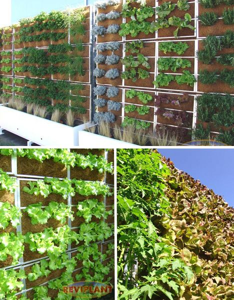 Reviplant Edible Green Wall Pr2750 Pinterest Garden Garden