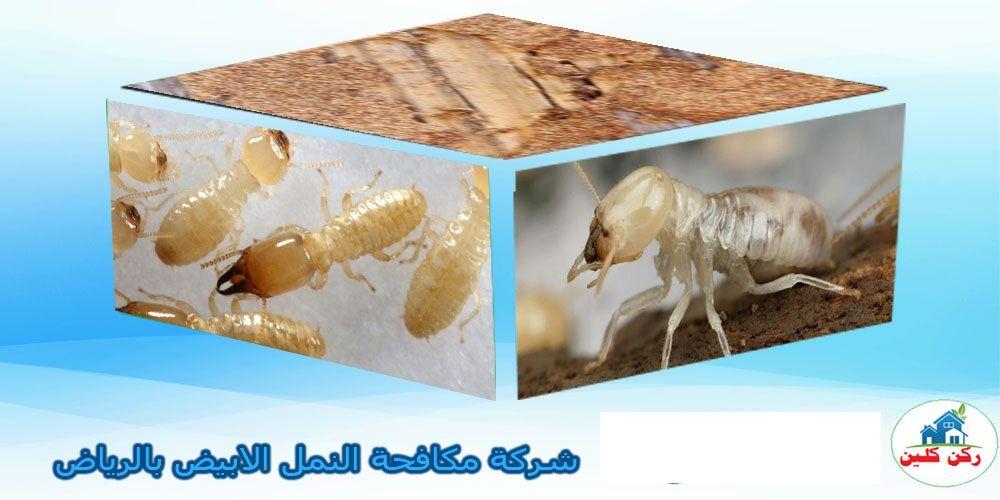 شركة مكافحة النمل الابيض بالرياض Decorative Boxes Home Decor Decor