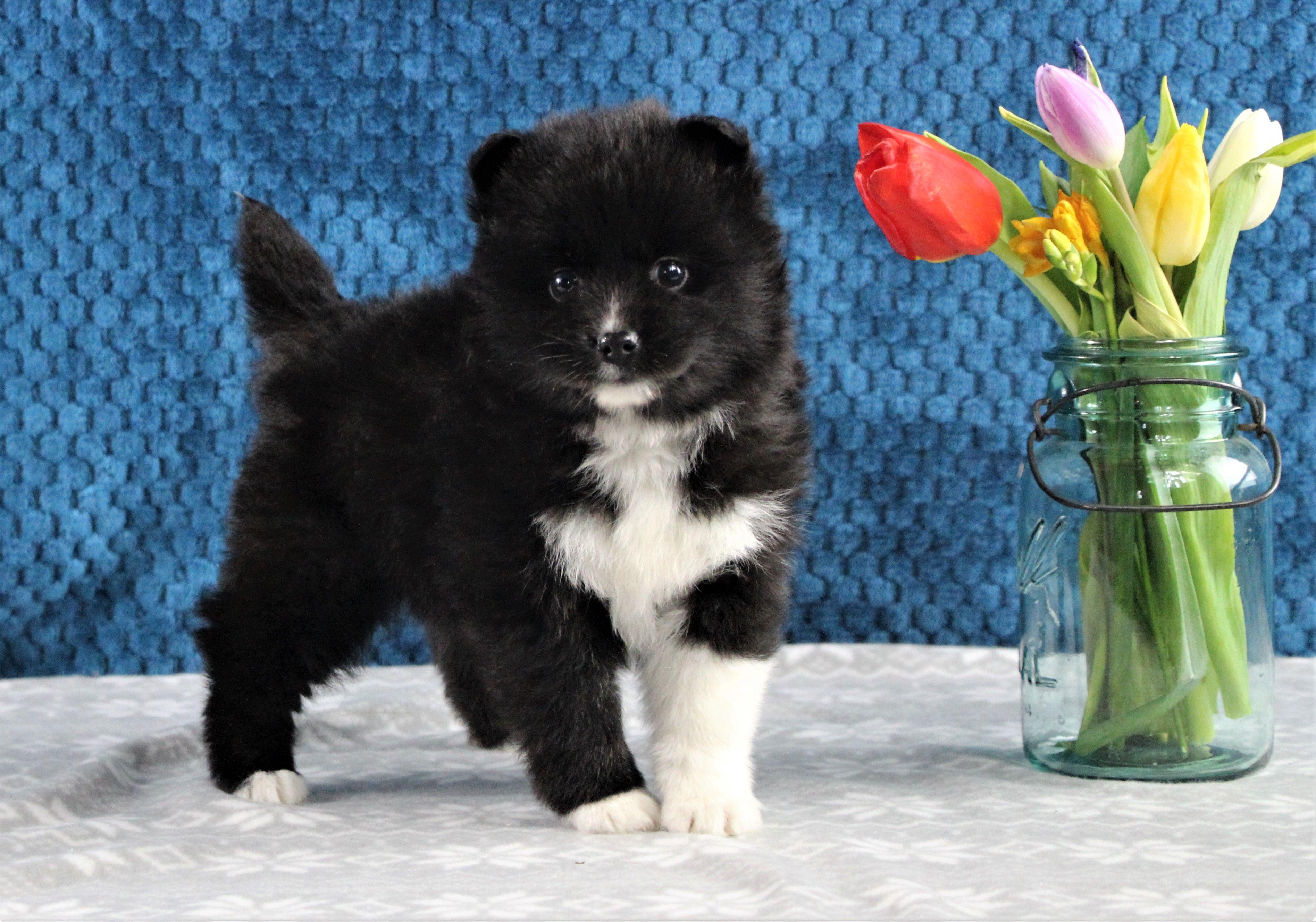 Puppies For Sale Zvirata