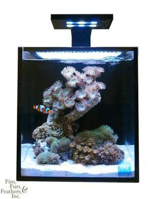 The 7 Best 10 Gallon Saltwater Tanks Reef Aquarium Saltwater Tank Nano Aquarium