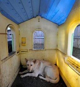 Best 25 Heated Dog House Ideas On Pinterest Dog Houses