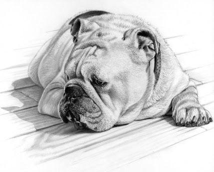 A Drawing Of An English Bulldog Pet Portraits Dog Drawing