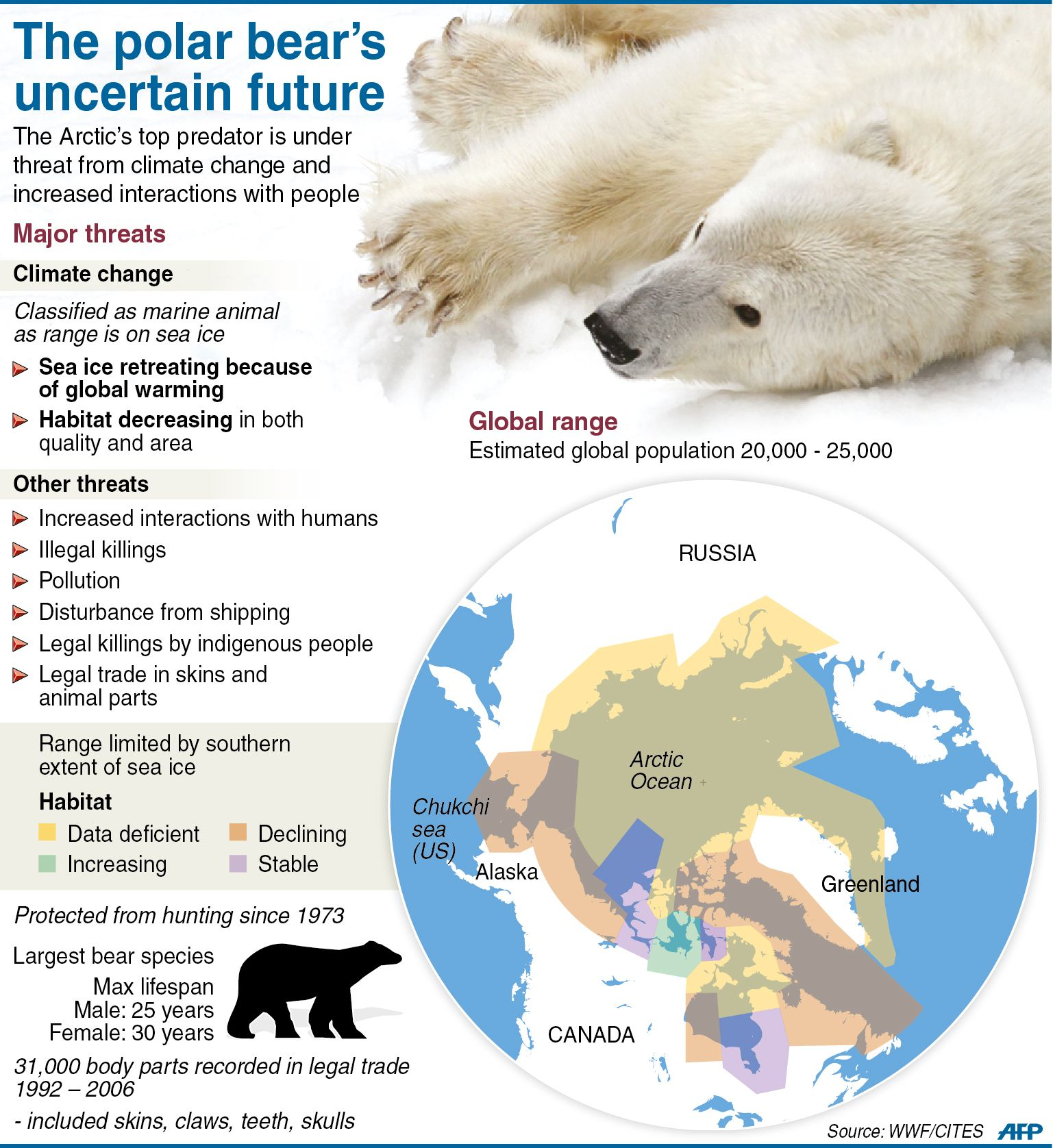 Graphic Fact File On Polar Bears A Major Meeting Of Governments On Threats To Endangered Species On Th Polar Bears Endangered Polar Bear Animal Facts For Kids