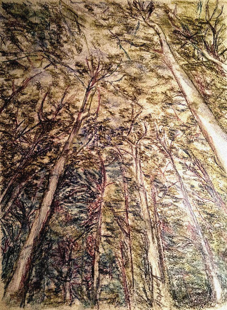 Šuma 15x20cm karton, drvene bojice