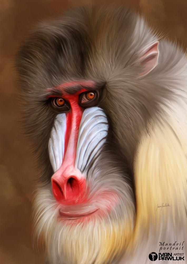 MANDRIL Portrait by Ivan Pawluk, via Behance