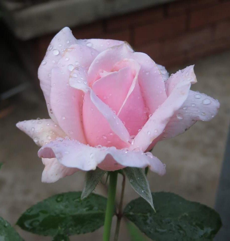 Pin By Lynda Swanson On Beautiful Flowers I Love Pinterest