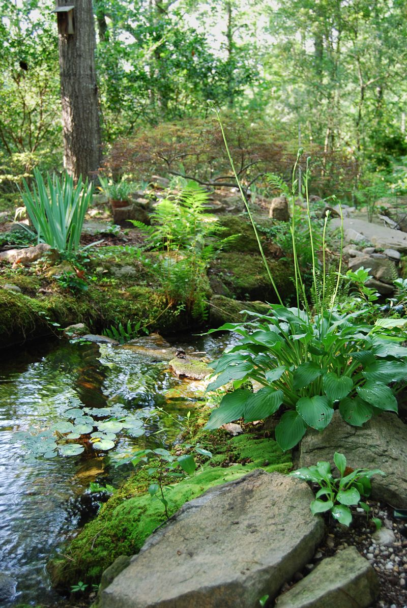 Stream detail nice selection of plants for the ponds edge for Natural koi pond