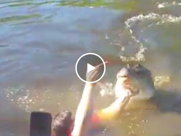 Darwin Award Nominee jumps in water with huge croc… for a selfie (Video) http://ift.tt/2sy6icN… http://ibeebz.com