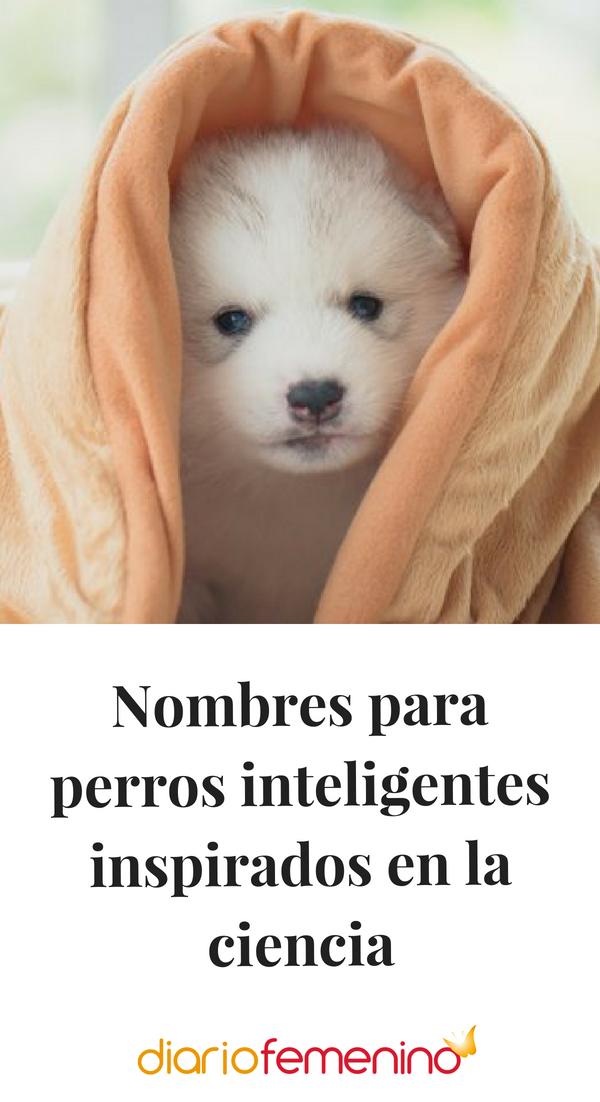 Nombres Para Perros Inteligentes Inspirados En La Ciencia Nombres Para Perro Hembra Nombres Para Mascotas Nombres De Perro Hembra