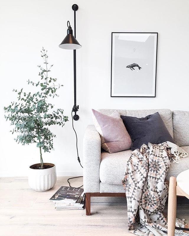 Eucalyptusen er tatt inn for høsten/vinteren. Ikke for å skryte altså, men det treet var halvparten når jeg kjøpte det i mai☺️ Men, noen som har tips som kan hjelpe for at det skal trives her inne gjennom vinteren? Tas imot med stor takk Fin torsdagskveld #eucalyptus #houseofrym #lampegras #woroom #nordiskehjem #bolia #papercollective #elledecoration #interior123