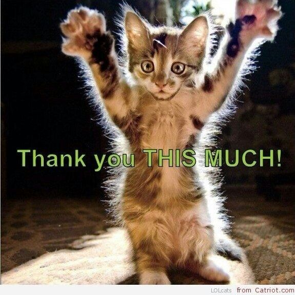 Funny Thank You Cat Memes : Thank you pinterest feral cats