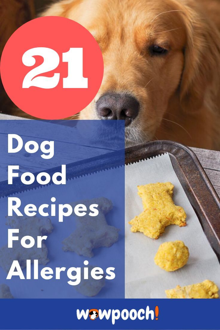 If Your Dog Is Riddled With Allergies Over Brand Name Food