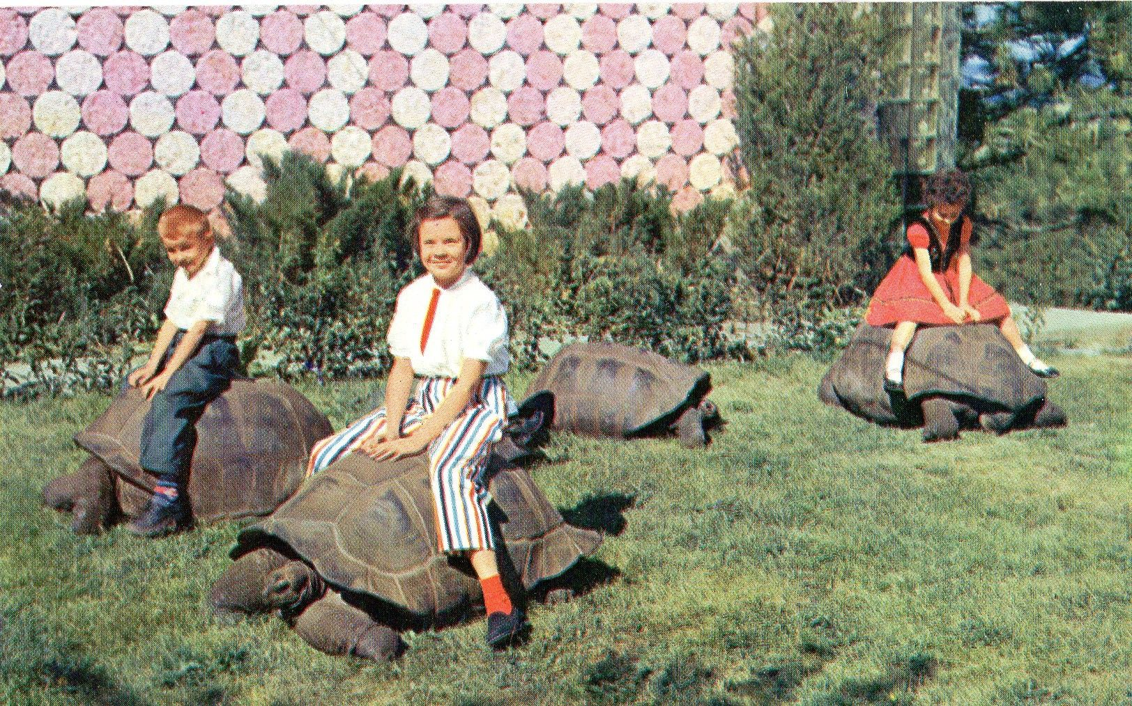 c3cfb098f6966819ce532b5c78aae95a - How Long Does Reptile Gardens Take